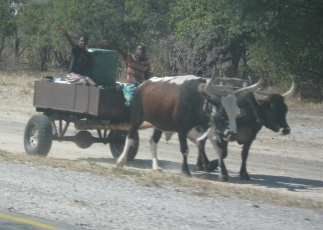 A common form of transport for the locals.