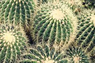 Photo by Madison Inouye on Pexels.com