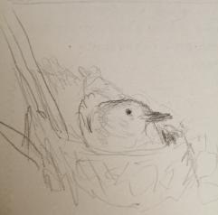 Non-dominant hand sketch no 2 by Morag Noffke.